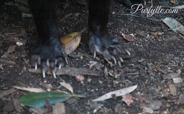 Tasmanian Devil's claws