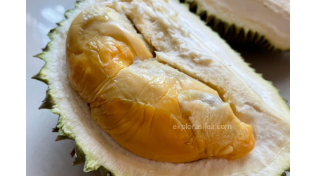 harga durian gred D101