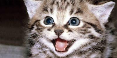 Kedilerin kusmaları ,Midesi bulanan kedi,kediler neden kusar,kedi kusmasi nasil önlenir,kedi kusması önleme