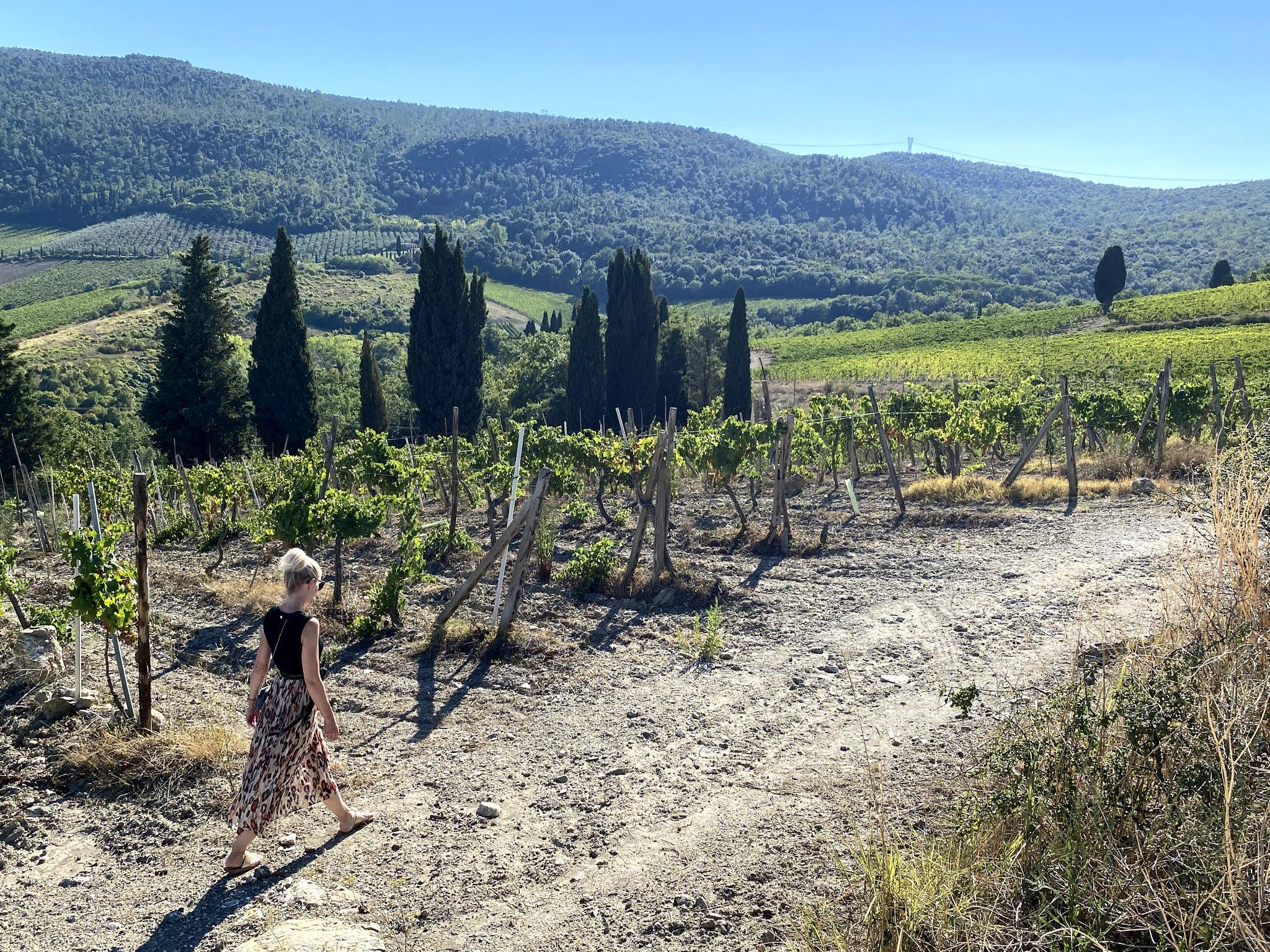 Viiniviljelmiä Toscanassa