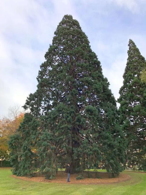 St Davids Park Tasmania trees