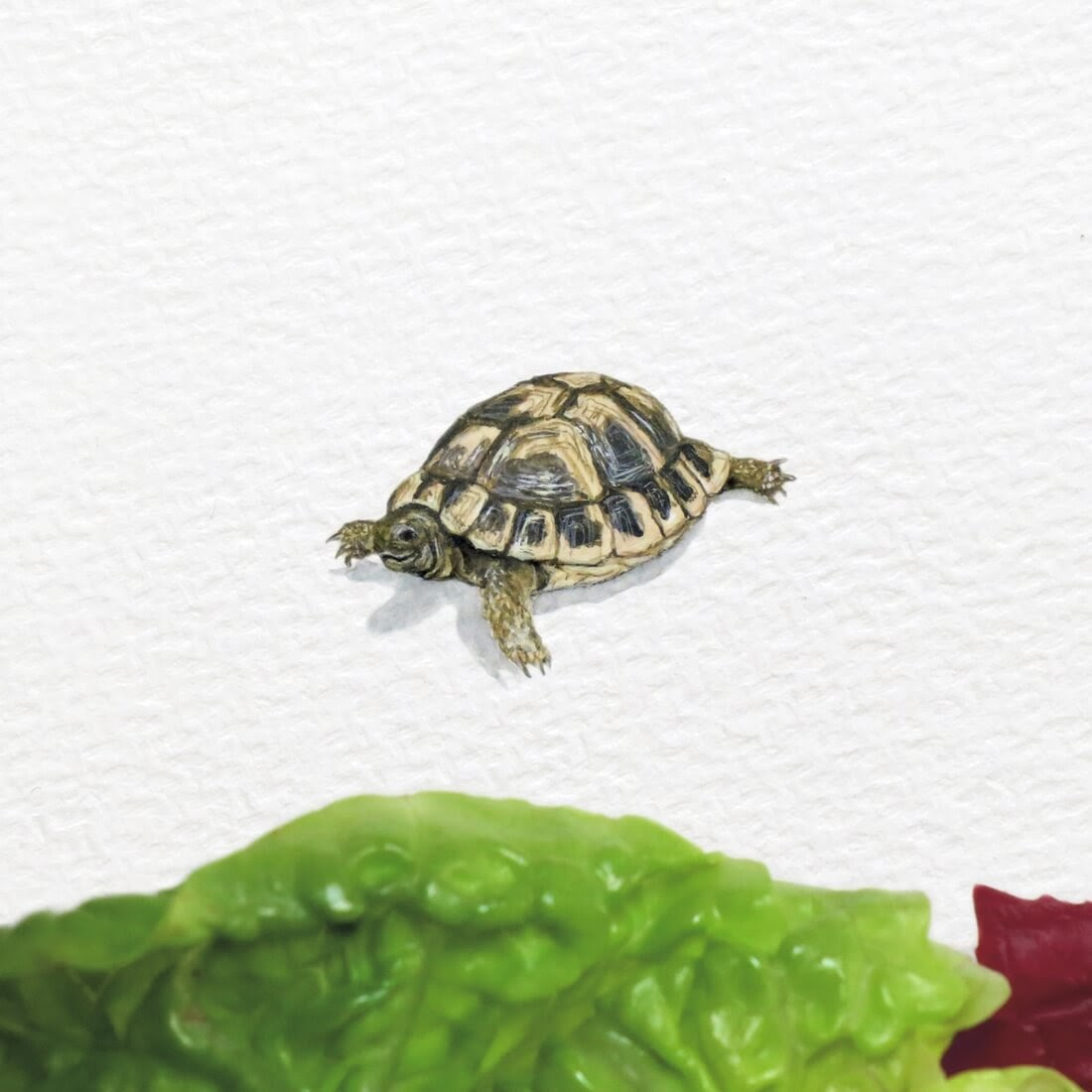 05-Tortoise-Frank Holzenburg Miniature Drawings and Paintings of Animals-www-designstack-co