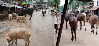 जालौन : बाजार में आवारा जानवरों का सडकों पर कब्जा, ग्राहक दुकानदार हलकान