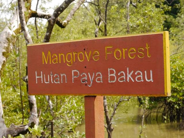 Mongrovenwald Schild Bako Nationalpark