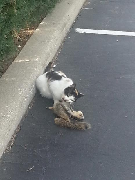 Porcupine Stew Cat Squirrel