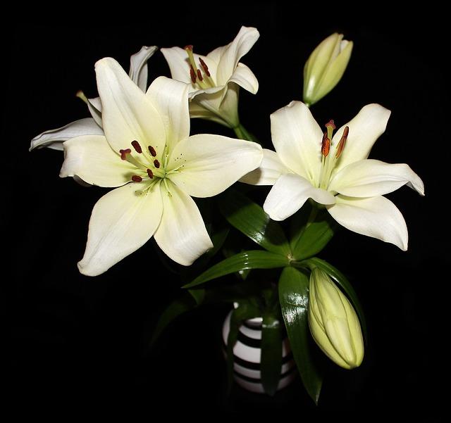 hoa ly vàng đẹp nhất thế giới 2