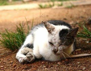 Cara Mengobati Kucing Cacingan Parah Paling Ampuh