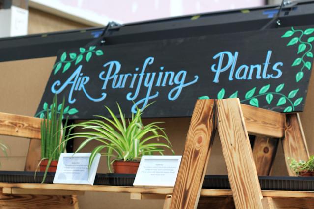 Air purifying plants at Solas