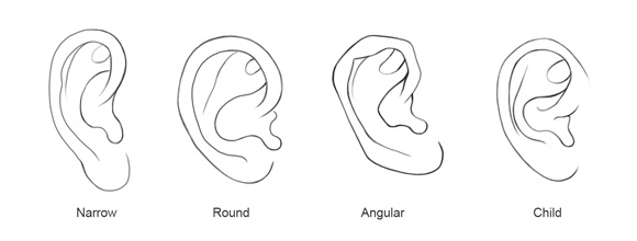 A common mistake when drawing the ear is to draw the helix continuing into the tragus in fact it curls past the tragus into the bowl of the concha
