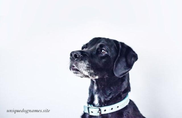 black dog names,unique black dog names