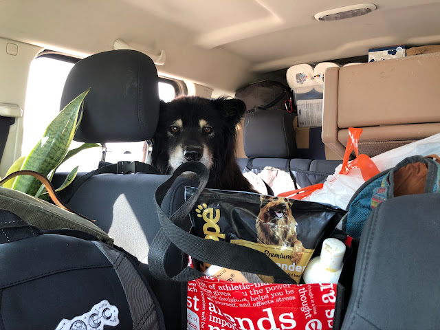 dog inside overpacked vehicle