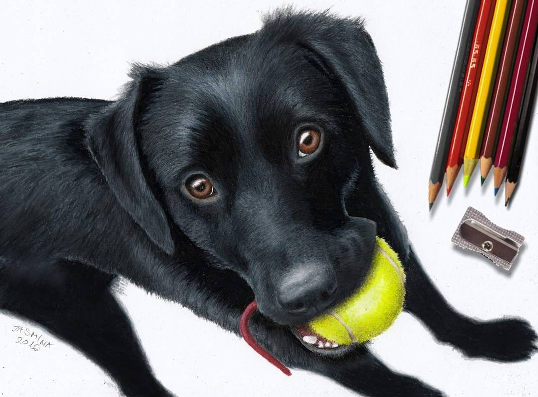 16-Black-Dog-Jasmina-Susak-Realistic-Animal-Drawings-with-Colored-Pencils-www-designstack-co