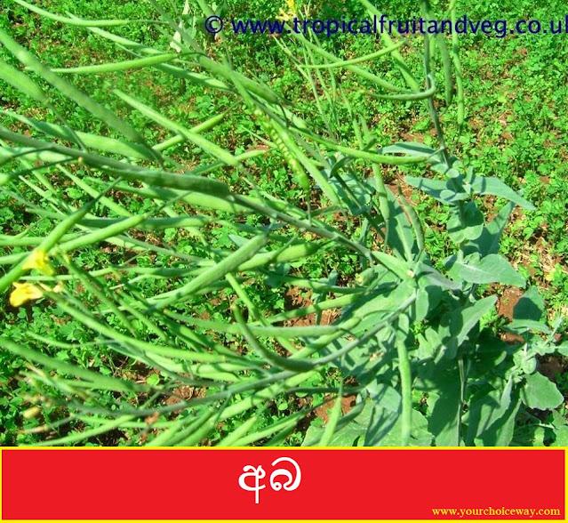 අබ (Aba - Brassica Juncea) - Your Choice Way