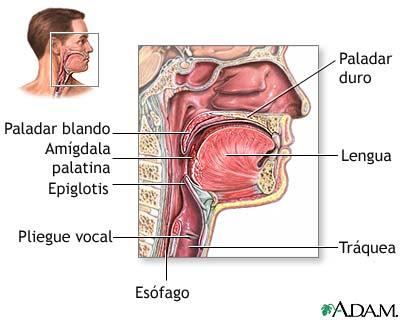 Cómo limpiar el moco atascado en la parte posterior de la garganta