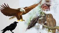 Bird can fly backward