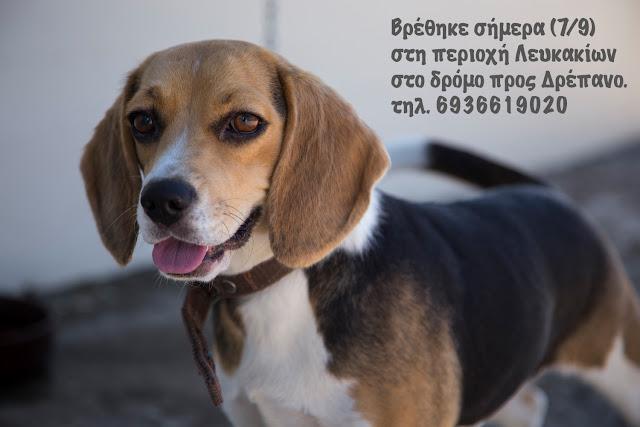 Βρέθηκε πανέμορφη σκυλίτσα στα Λευκάκια - Μήπως την αναζητά κάποιος