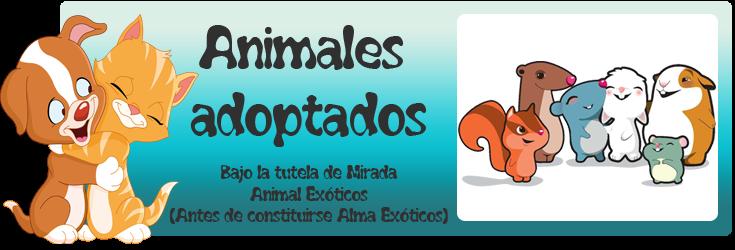 http://mirada-animal-toledo.blogspot.com.es/search/label/3.Ex%C3%B3ticos%20adoptados.