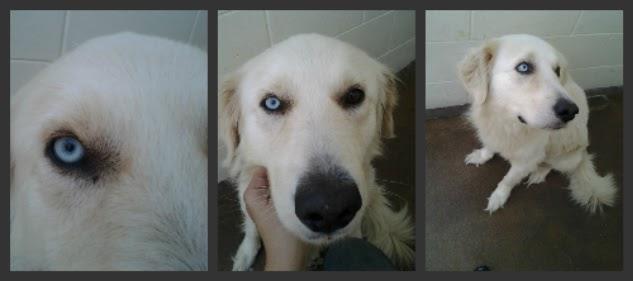 The Shelter Girl Heterochromia And Hip Dysplasia