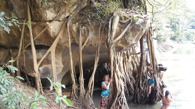 свисающие в реку корни деревьев