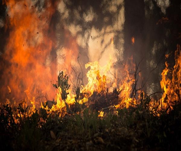 https://www.bioorbis.org/2019/10/diferenca-queimada-incendio-florestal.html