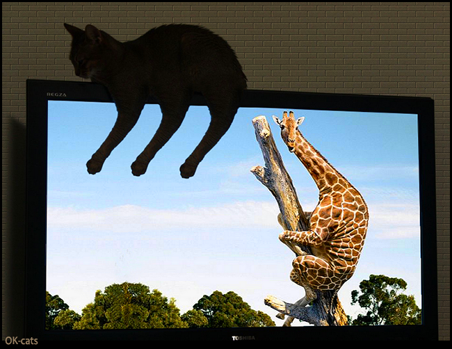 Photoshopped Cat picture • Mutant cat (6 arms & legs) napping on TV  & a curious giraffe on a tree!