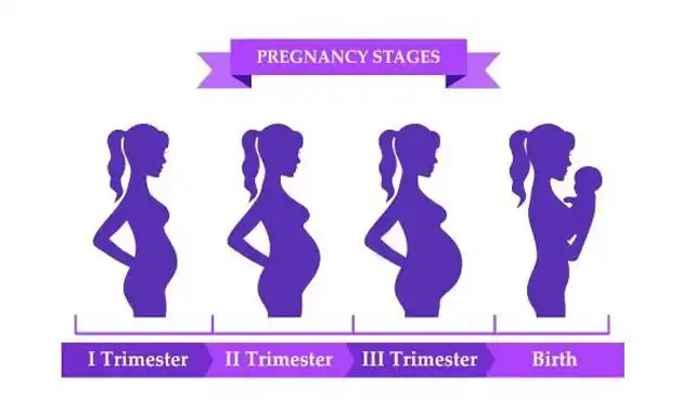 Pregnancy trimesters The most important milestones