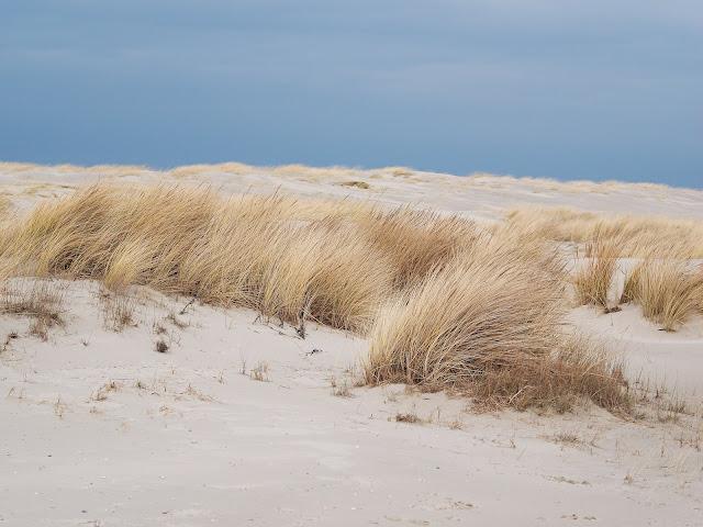 Dünen auf Langeoog