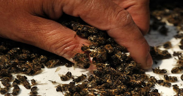 Τι θα συμβεί στον πλανήτη εάν εξαφανιστούν οι μέλισσες;