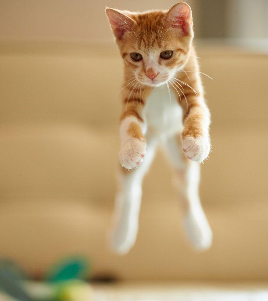 11+ Photos of Fabulous Jumping Cats