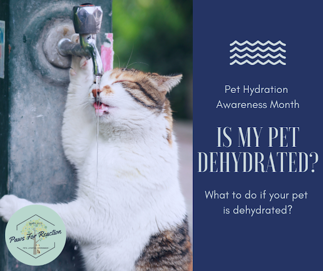 Pet Hydration Awareness Month: Is my pet dehydrated? What do I do if my pet is dehydrated?