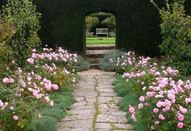 бордюр из роз и гвоздики