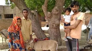 घायल नीलगाय के बच्चे को खिराज वाला सेवा संस्थान पर लाया गया