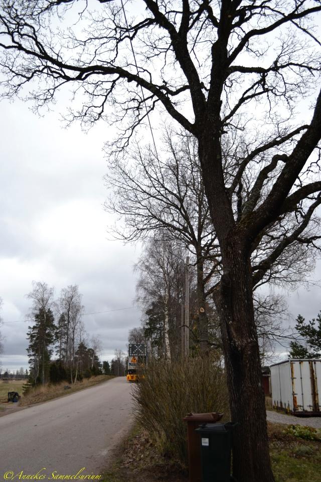 Annekes Sammelsurium - leben in Schweden...: Januar 2018