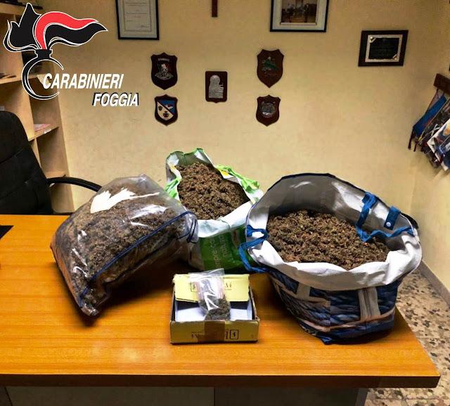 Carabinieri e Cacciatori Puglia setacciano San Nicandro G.co. Controlli a persone e negozi per l'aggressione ai due Marescialli, scovati 6 kg di marijuana. Svolti arresti, fermi, sanzioni, sequestri