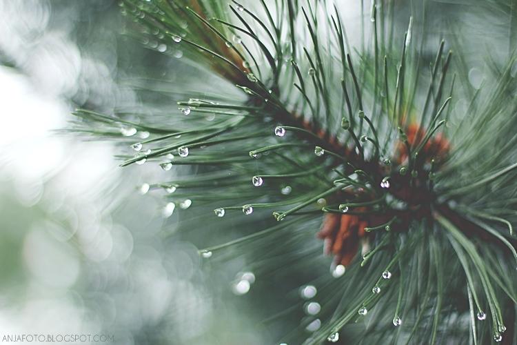 deszcz, krople deszczu, krople, rain drops, bokeh, nature photography