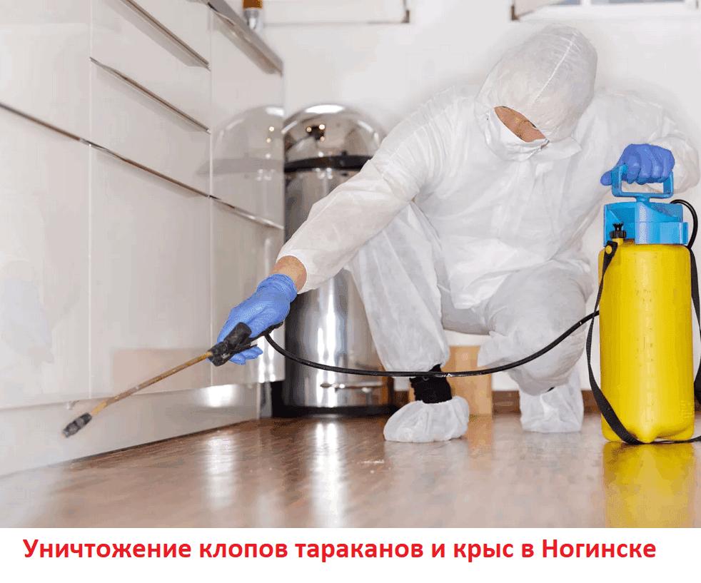 Уничтожение клопов тараканов и крыс в Ногинске