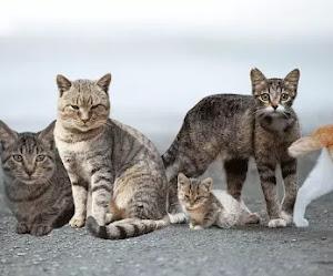 ¿Cómo es la vida de los pobres gatos callejeros?