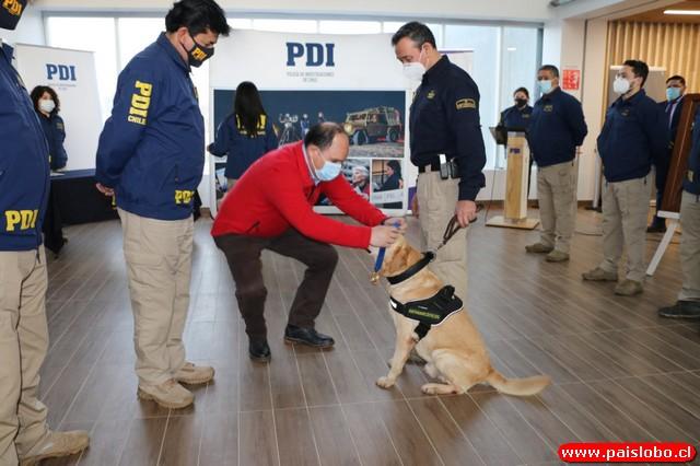 PDI despide al ejemplar Canino experto en droga