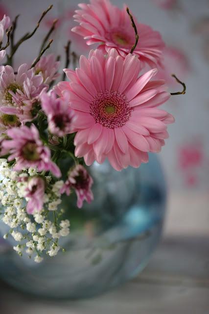 gerbera, pinkki kukka,