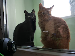 two cats - black and orange