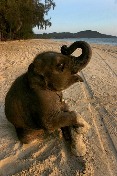 no1 amazing things cute baby elephant