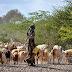 Economie: Comment renforcer la croissance économique et la résilience dans les régions frontalières de la Corne de l'Afrique