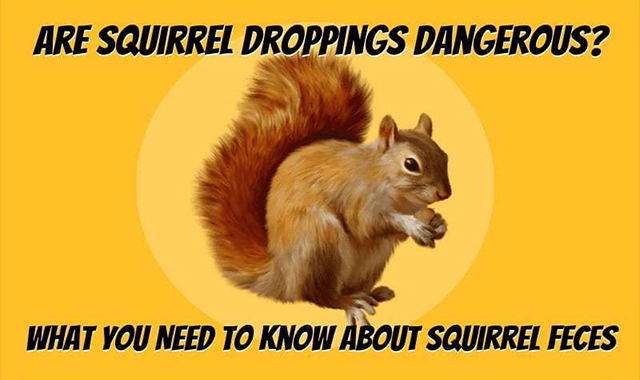 What You Need to Know About Squirrel Poop
