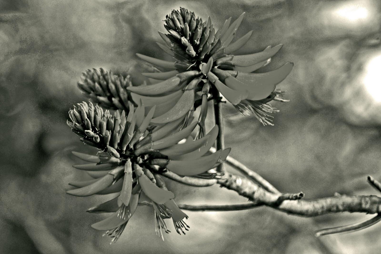 majuba photography flower garden