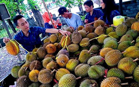 wisata kebun durian di lampung