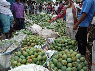 আমের সিজিনে চাঁপাই নাবাবগঞ্জে আমের বাজারে প্রতিদিন সবাই গাছ থেকে আম পেড়ে নিয়ে আসে এবং প্রতিদিন আমের সিজিনে কোটি টাকার লেনদেন হয়