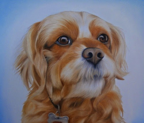 Cavapoo Pet Portrait Cavalier King Charles cross Poodle