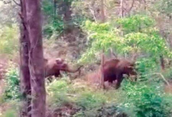 Kannur, News, Kerala, Elephant, Elephant attack, Government, Aralam farm, elephants in Fourth Block of Aralam farm