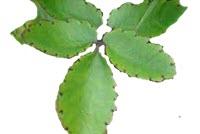 Tumbuhan memiliki banyak manfaat bagi kehidupan manusia Pembelajaran 1 Subtema 4  Pertumbuhan dan Perkembangan Tumbuhan