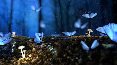 blue butterflies in a woddy brown forest with little white mushrooms